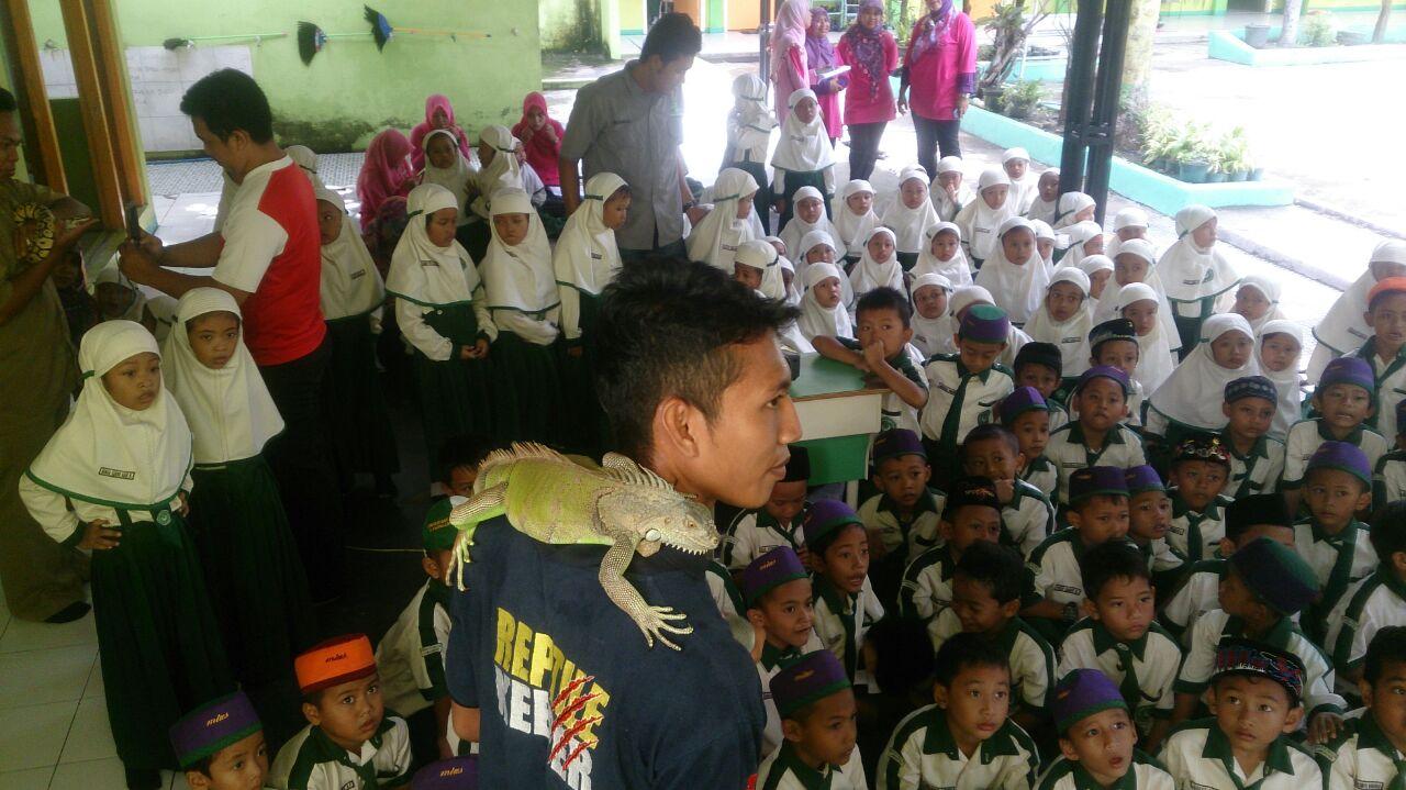 Mengenal Reptil